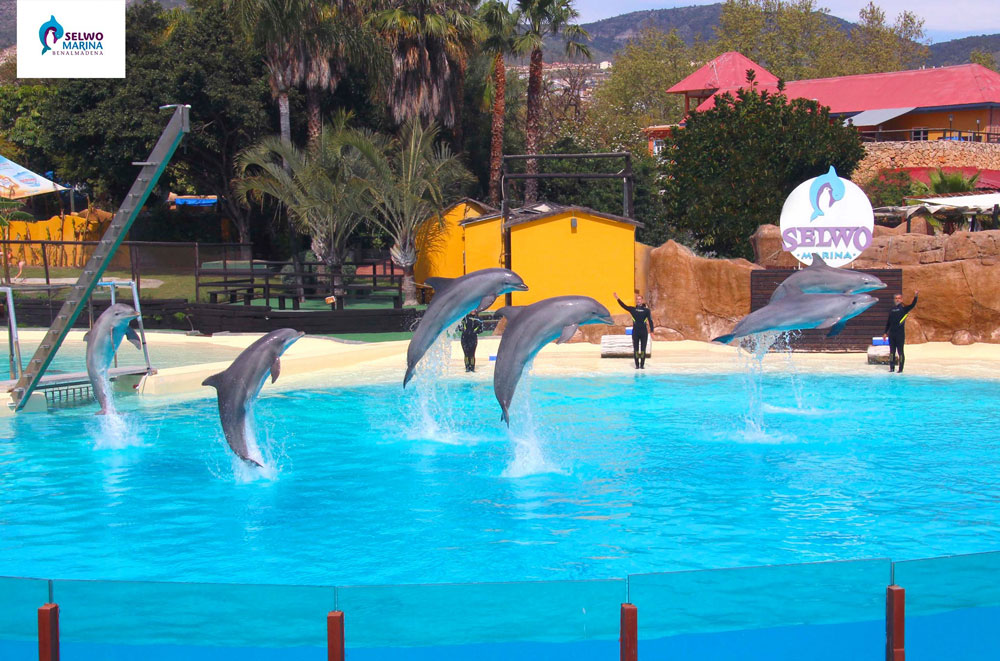 Дельфинарий сельво в бенальмадене