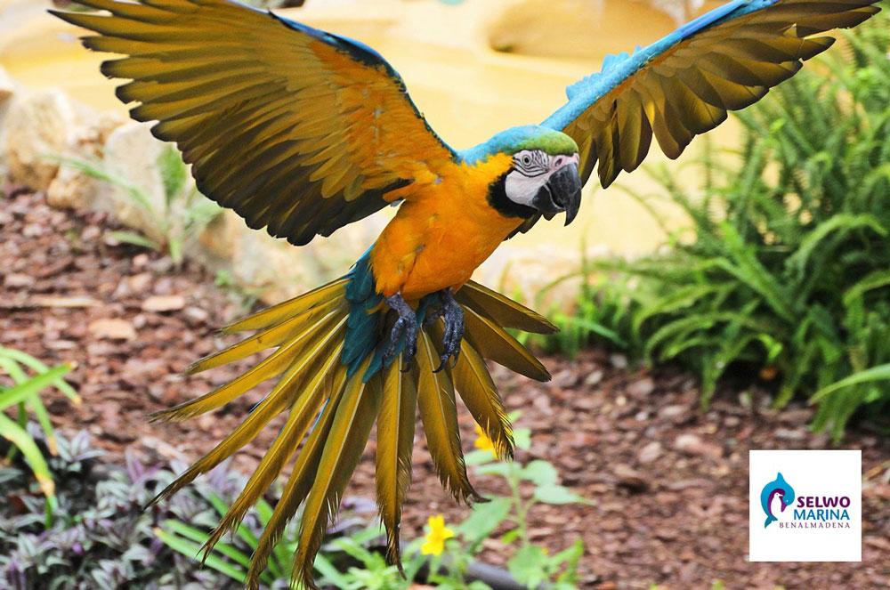 Попугай в марбелье