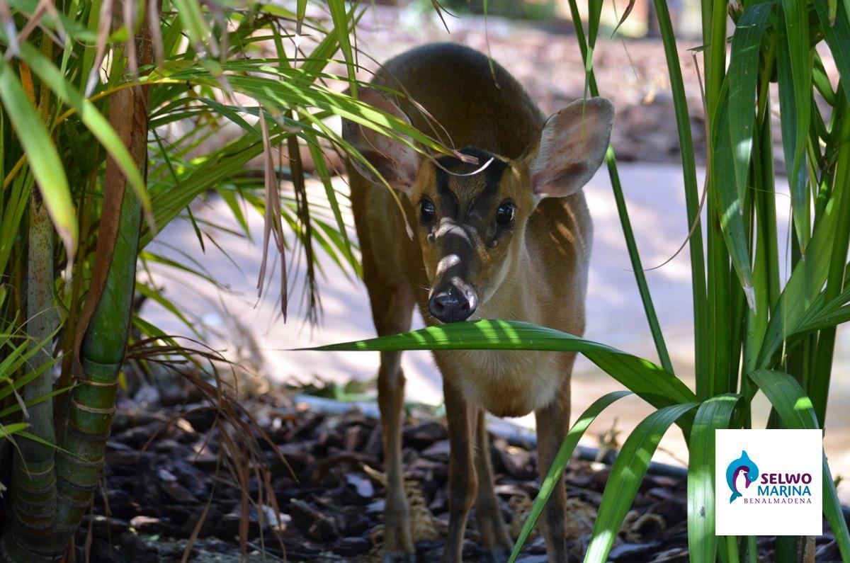 животные сельво марина в бенальмадене