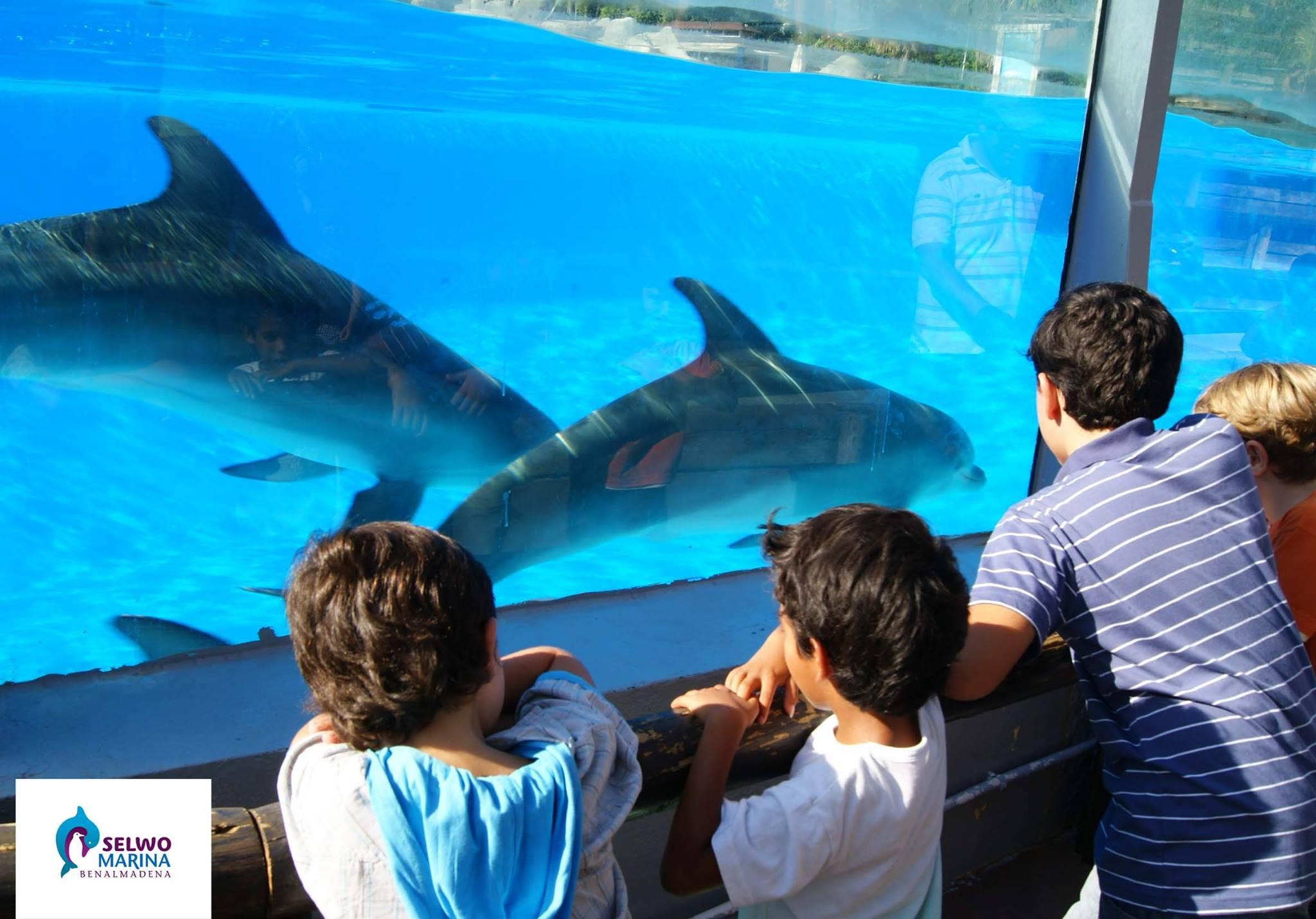 сельво дельфинарий малага