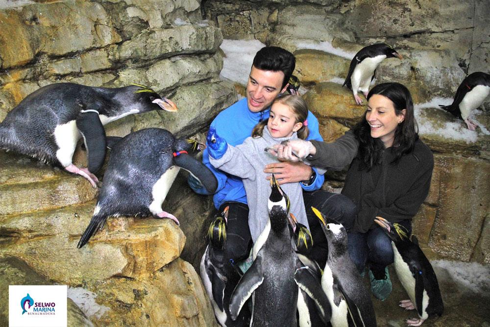 пингвины и дельфины в марбелье