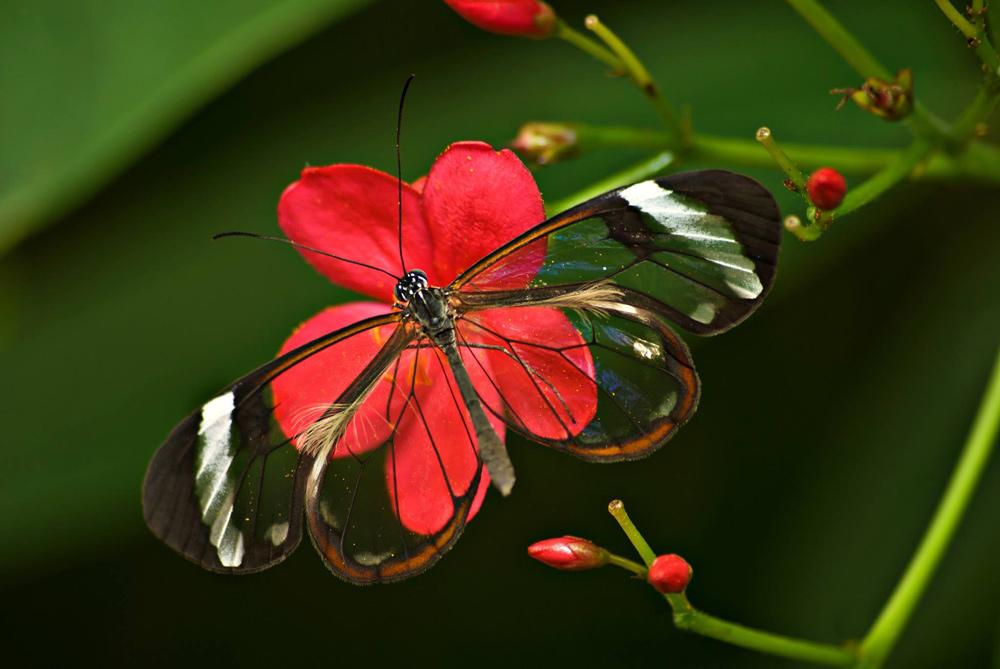 андалузия парк бабочек
