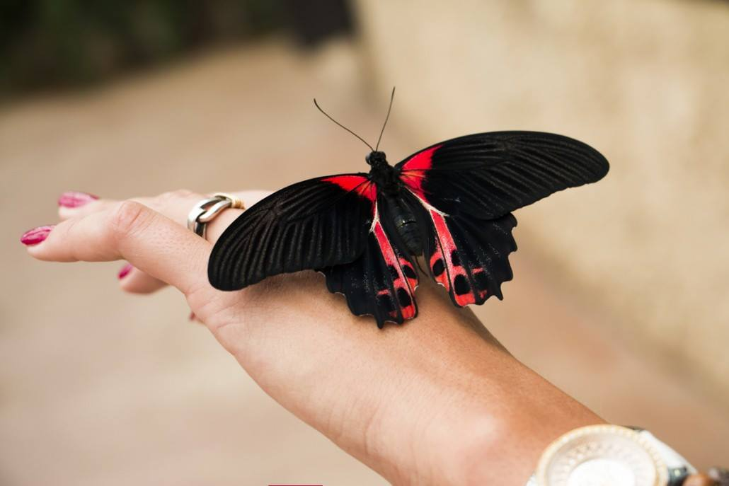 марбелья парк бабочек