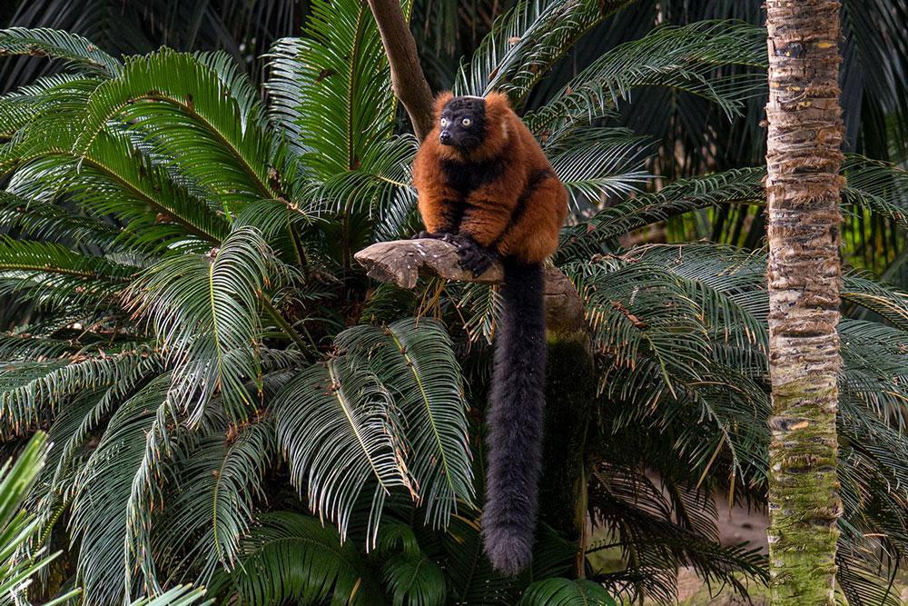 марбелья детский зоопарк