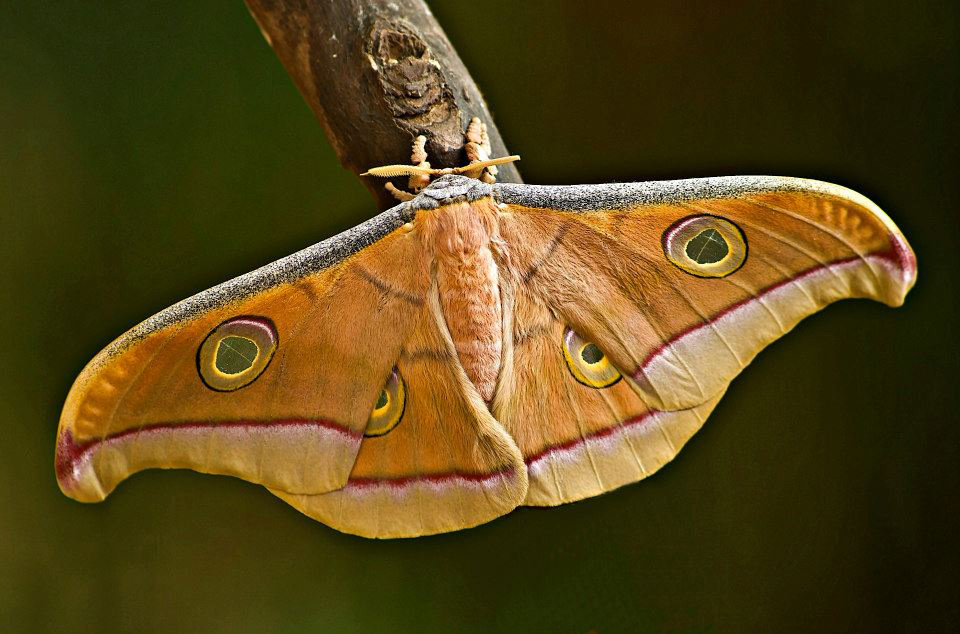 парк бабочек анделузия