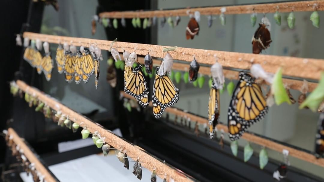 парк бабочек малага