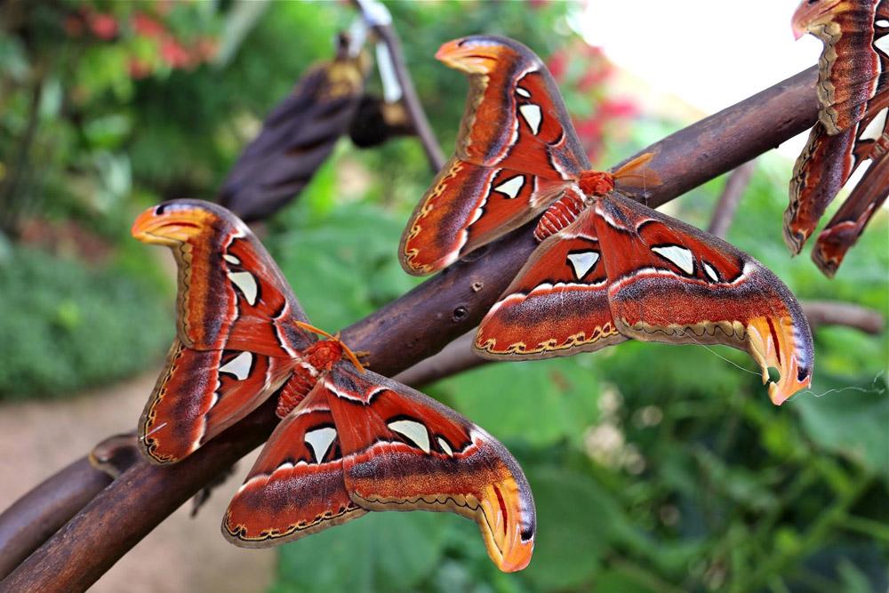 парк бабочек в бенальмадене