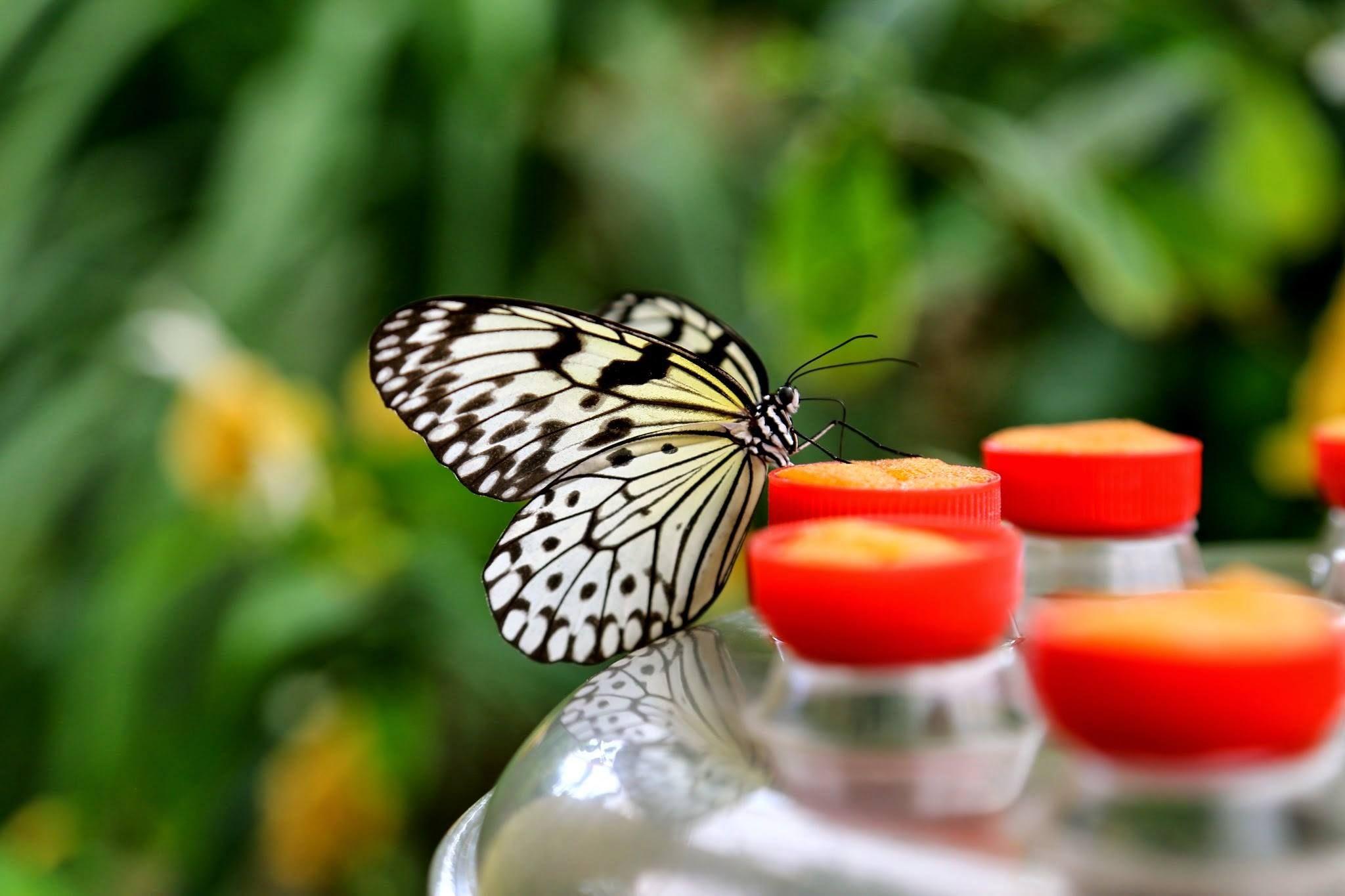 парк бабочек в малаге
