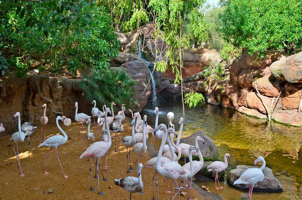 зоопарк для детей фуэнхирола