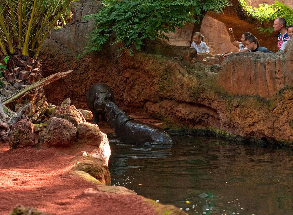 зоопарк fuengirola