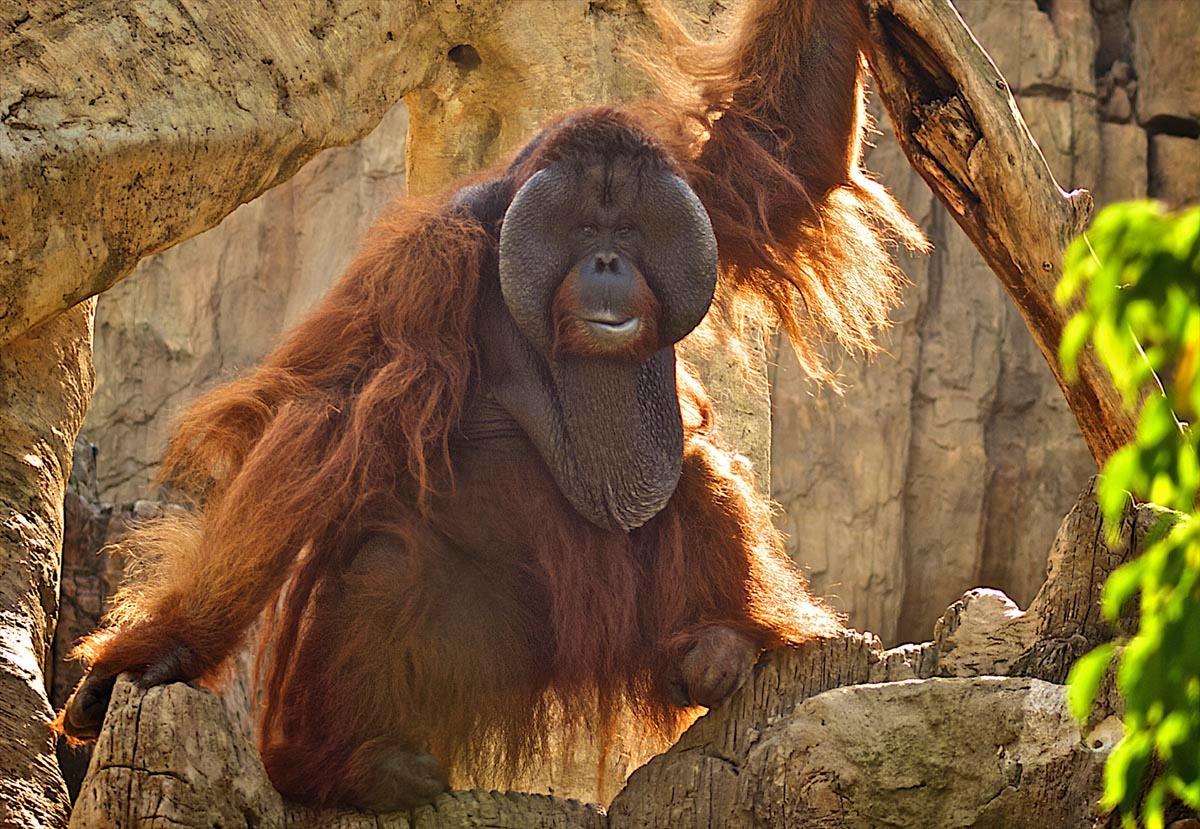 зоопарк malaga