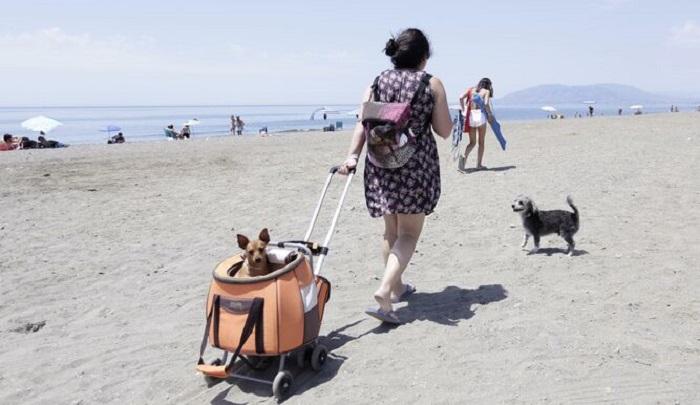 Собачий пляж в Марбелье