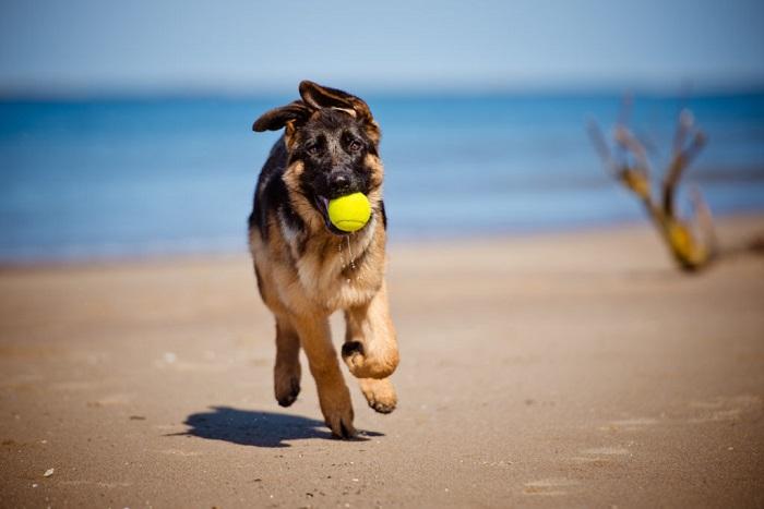 Пляж для собак в Puerto Banus