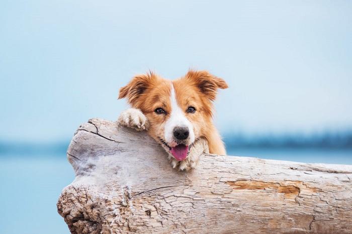 Пляж для собак в Пуэрто Банус