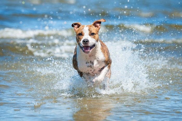 Специальные пляжи для собак в Марбелье