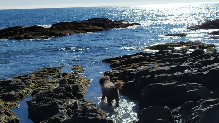 Специальные пляжи для собак на Коста дель Соль
